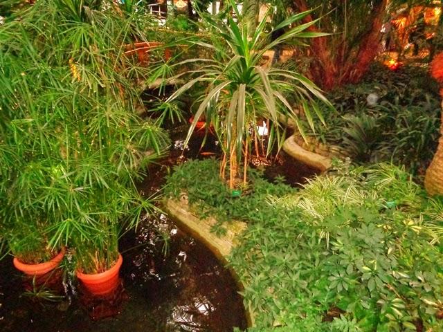 Zimą pod palmami