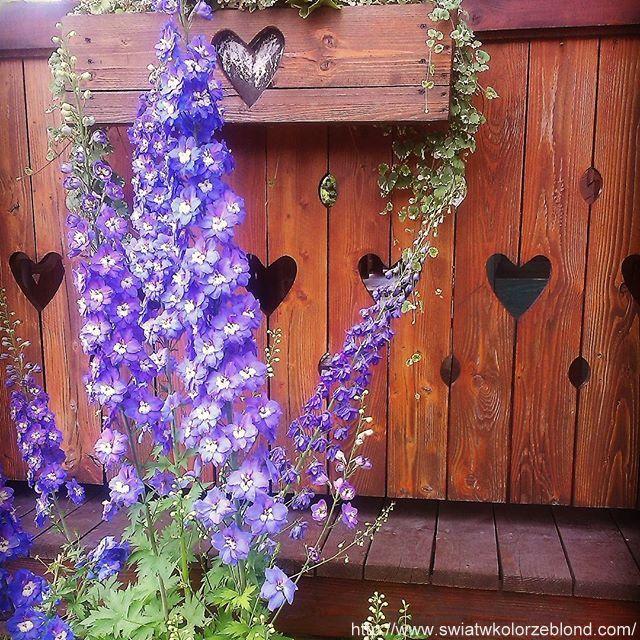 w górskim klimacie kwiaty i akcenty góralskie