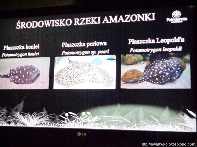 Palmiarnia w Gliwicach akwarium