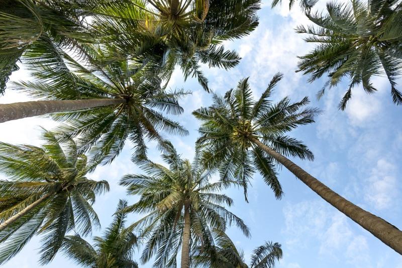 Wakacyjne inspiracje widok na palmy