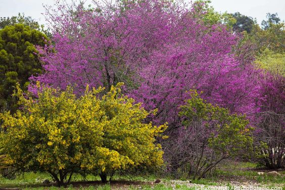 ogród naturalny blisko natury