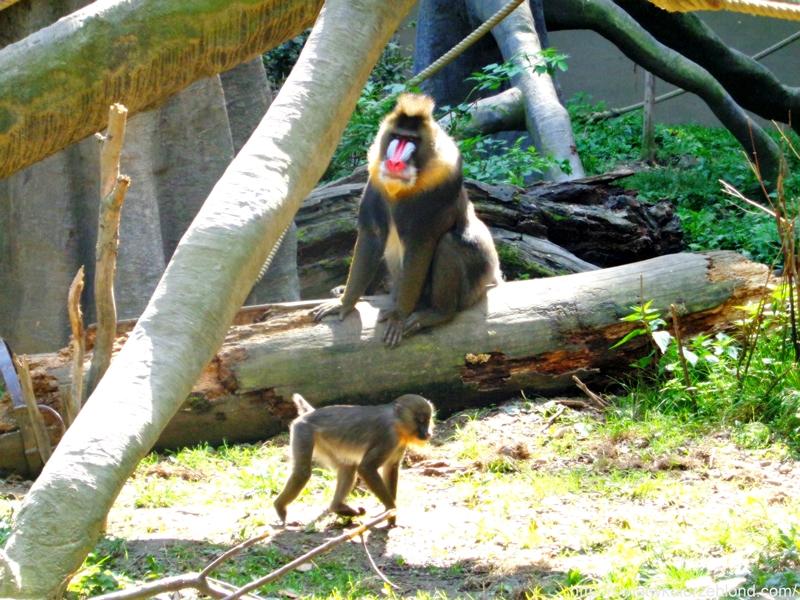 ZOO w Ostravie małpy