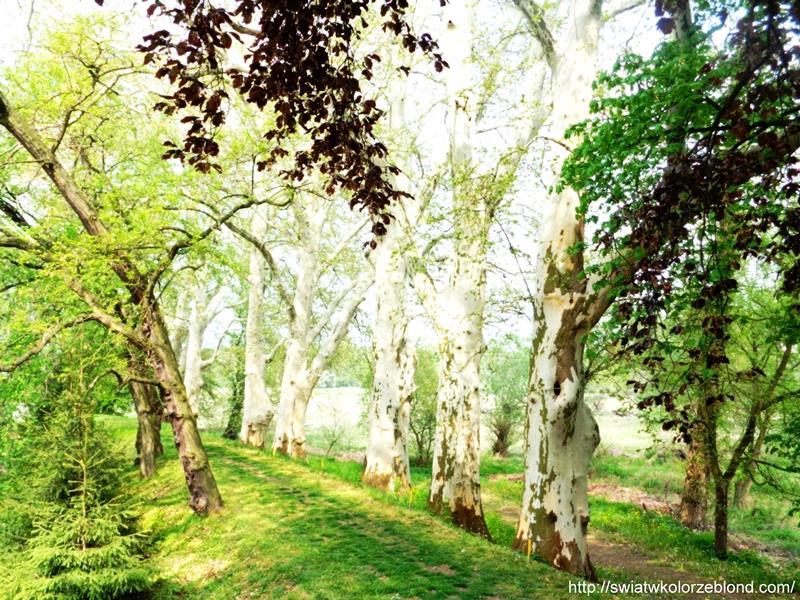 Zamek w Czerne park blog